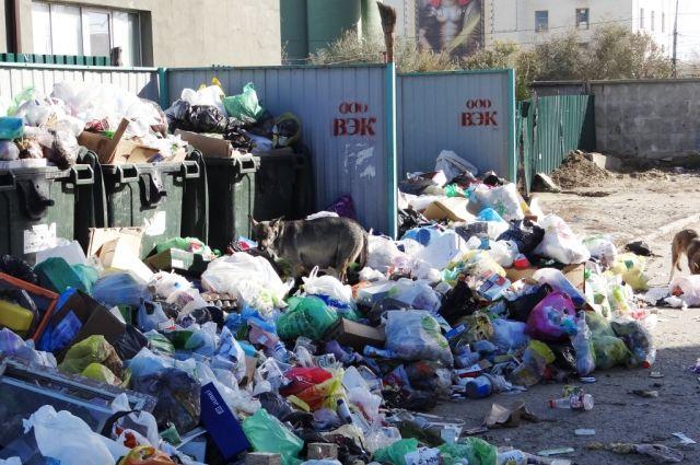 ВСаратовской области каждый год появляется по500 свалок