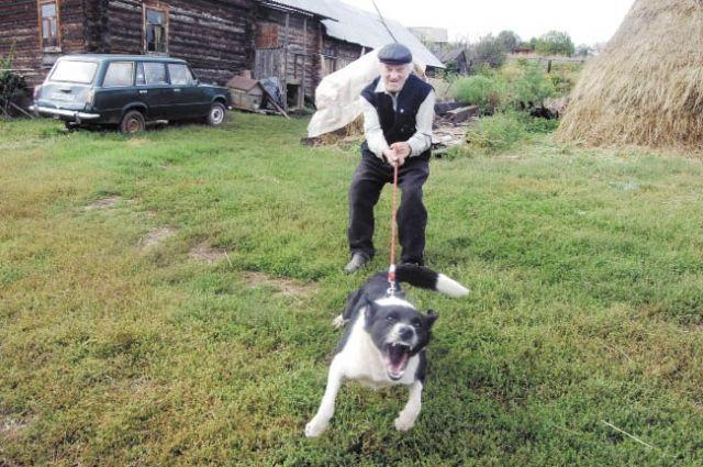 ВОренбургской области собачка набросилась на8-летнего ребенка