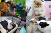 Щенки редких пород собак стоят больших денег.