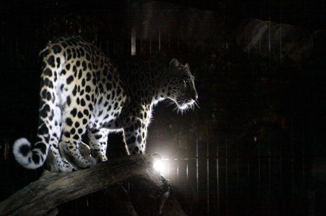 Хищники более активны ночью.