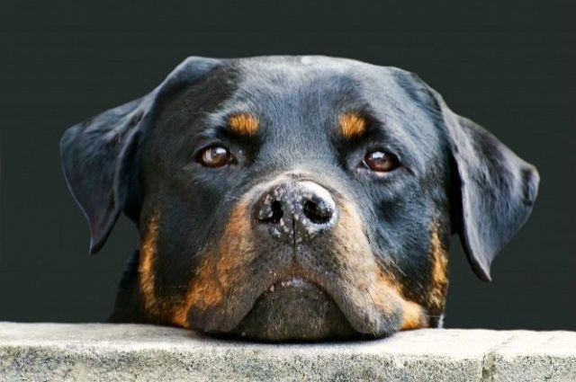 Жительница Оренбургского района из мести украла собаку бывшего начальника