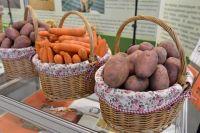 За прошедший год в нашем регионе накопали 1240 тонн картофеля.
