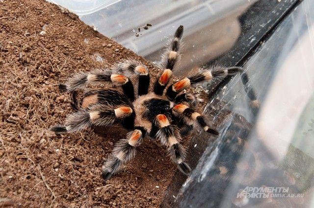 Выставка называется «Восемь ног и хелицеры. Удивительный мир пауков».