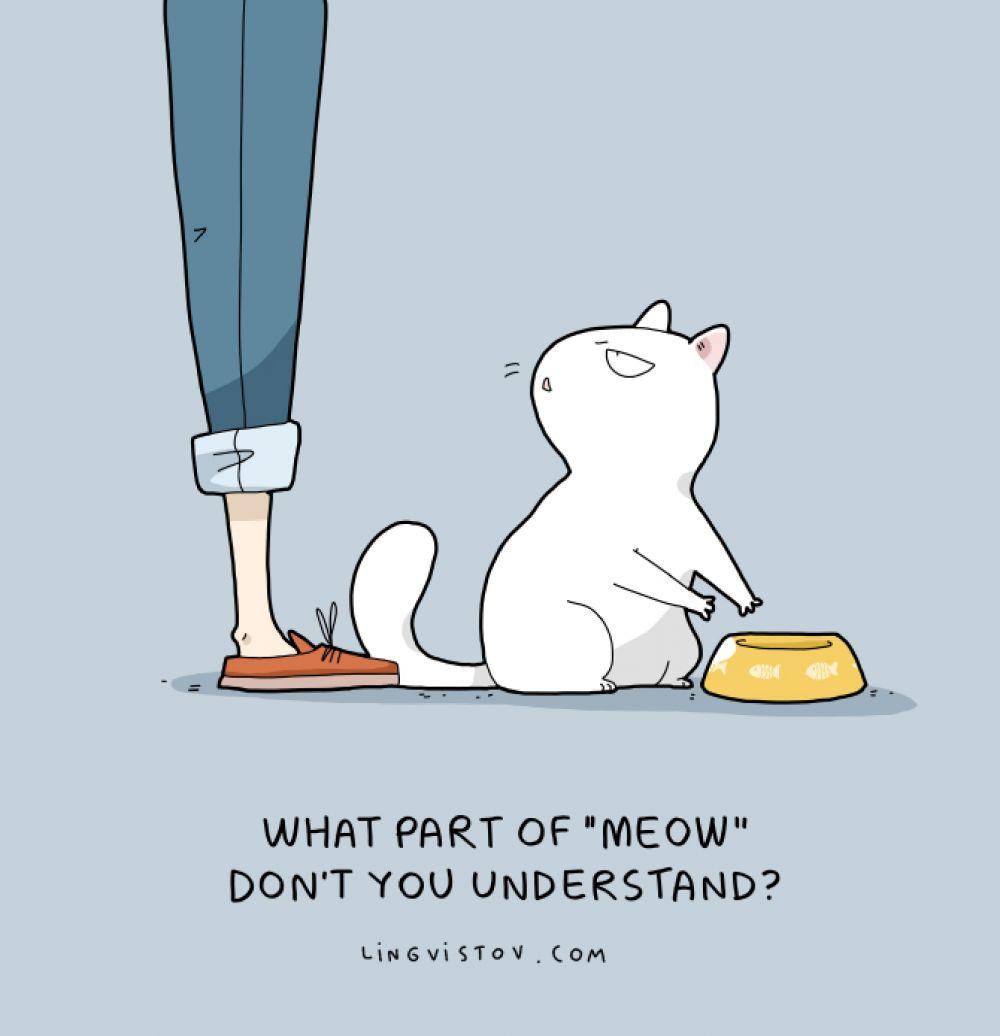«Какая часть «мяу» тебе не понятна?»