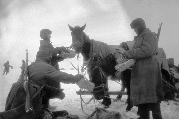 Этими же лаптями советские бойцы кормили лошадей.