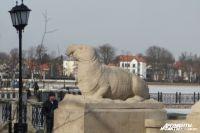 Памятник интернет-мему «Ждун» обнаружили в Калининграде.