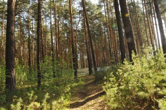 Родители бросили подростка связанным в лесу.