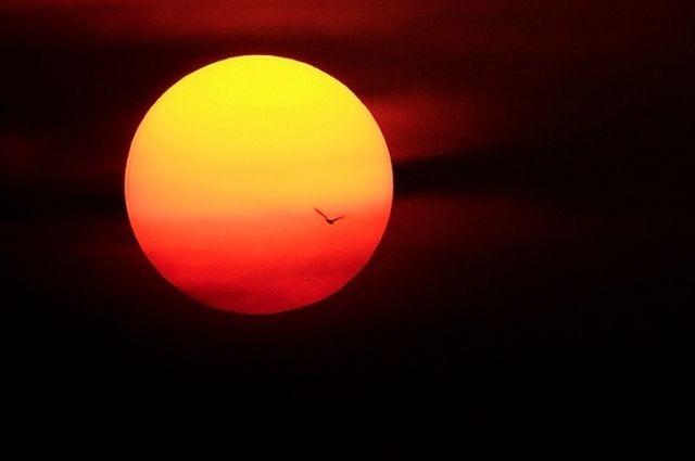 В 2050г. Солнце практически лишится пятен— Астрофизики