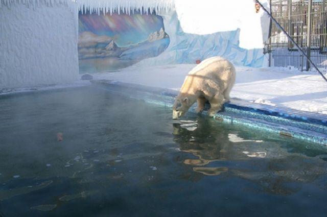 Купание в бассейне стало для Белого традиционным развлечением.