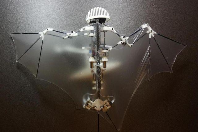 Жители Америки создали неповторимого робота-летучую мышь