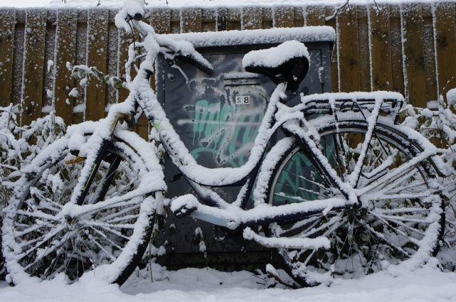Несмотря на зимний сезон, велосипед приглянулся сосоду
