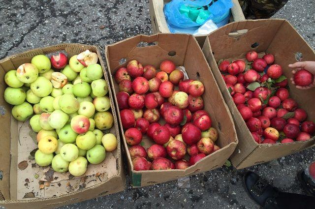 Нарынке вКореновске обнаружили санкционные яблоки изПольши
