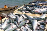 В структуре экспорта преобладает рыбное филе (38%), готовая или консервированная рыба и икра (21%) и ракообразные (20%)