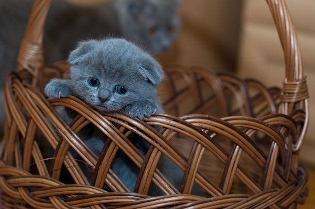 ВКисловодске cотрудники экстренных служб защитили жильцов дома отагрессивного котенка