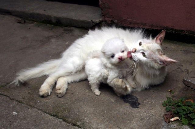 Животные становятся друг к другу заботливее, чем человек?