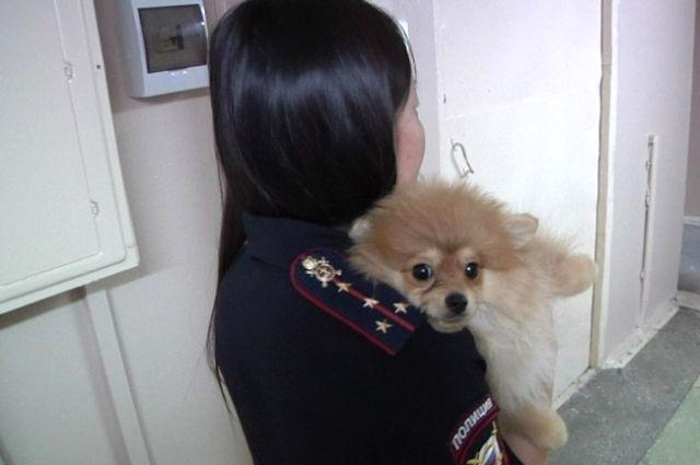 Иркутянин похитил щенка германского шпица стоимостью 30 тыс. руб.