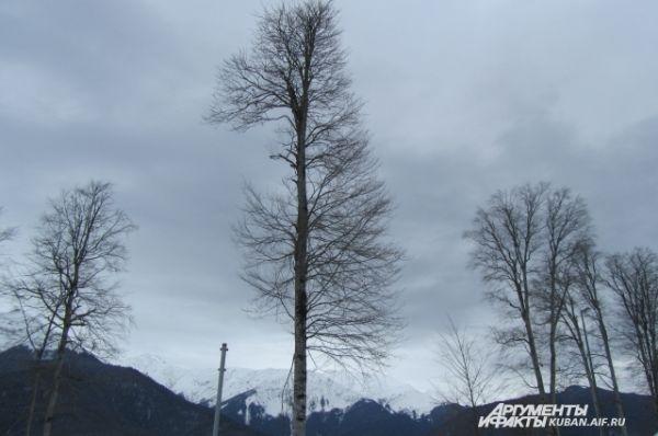 Продолжительность горнолыжного сезона в Красной Поляне составляет 140 дней году.
