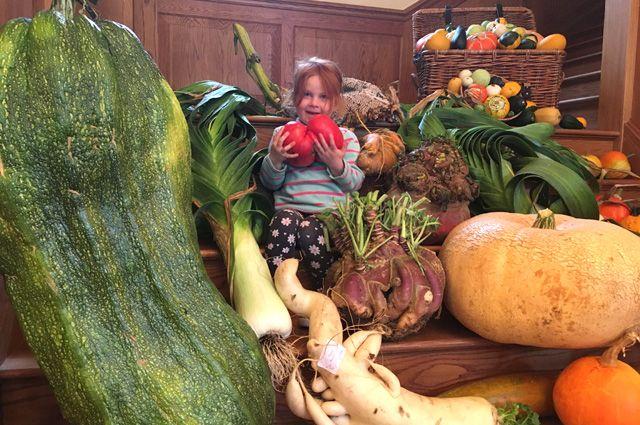 Популярные сорта овощей