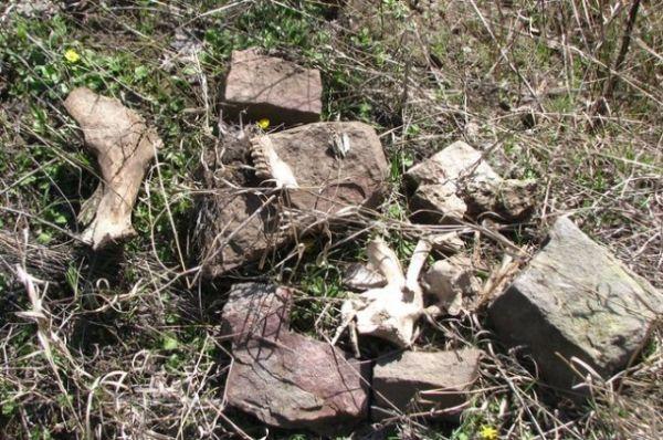 На территории Ростовской области происходит активное и беспощадное разграбление памятников культурного наследия.