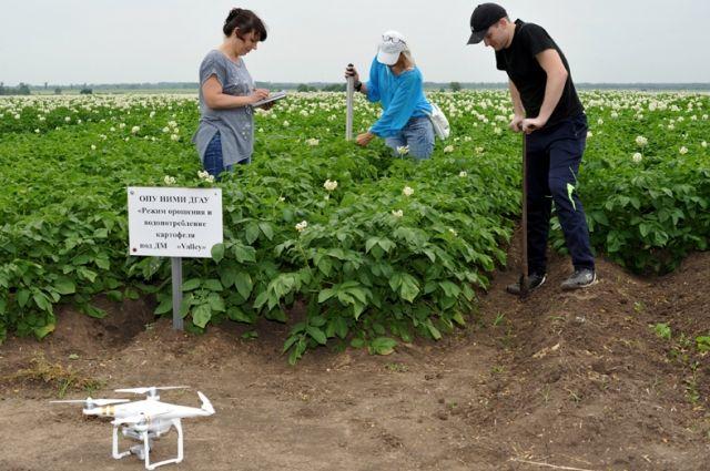 Учёные вуза разрабатывают режимы орошения сельхозкультур, которые можно применять при дефиците воды.