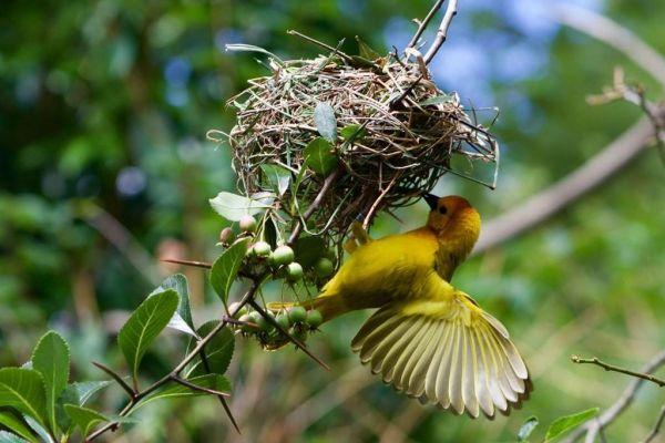 Сложнее всего в кадре, среди животных поймать птиц, особенно маленьких. Но 13-летнему Давиду Хопкинсу хватило терпения, чтобы выждать нужный момент