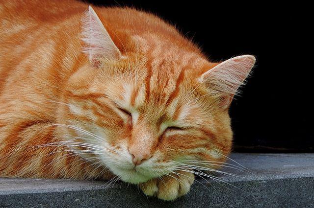 В Гае оставленный хозяином кот неделю не давал спать соседям