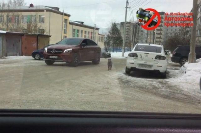 Водитель выгуливает пса прямо на ходу.