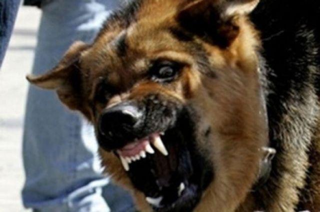 Жительница Семенова требует с владельца покусавшей еесобаки 25 000