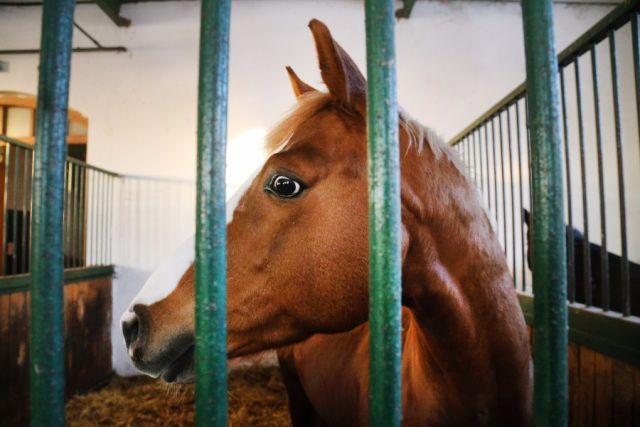 Работники милиции задержали вНижегородской области подозреваемого вхищении лошади