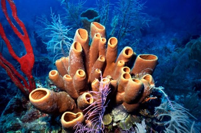 Морские губки приспособлены к жизни при самых разных температурах