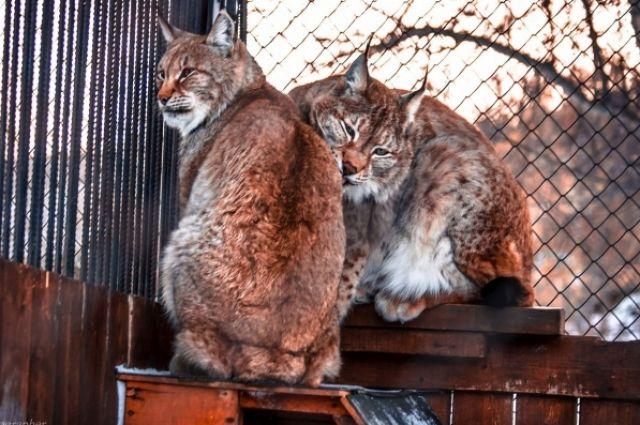 Зоологи уверенны: животные любят так же, как люди.