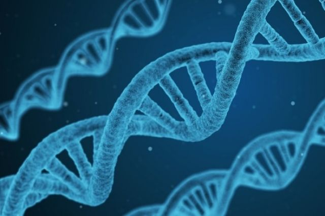 тест-ДНК