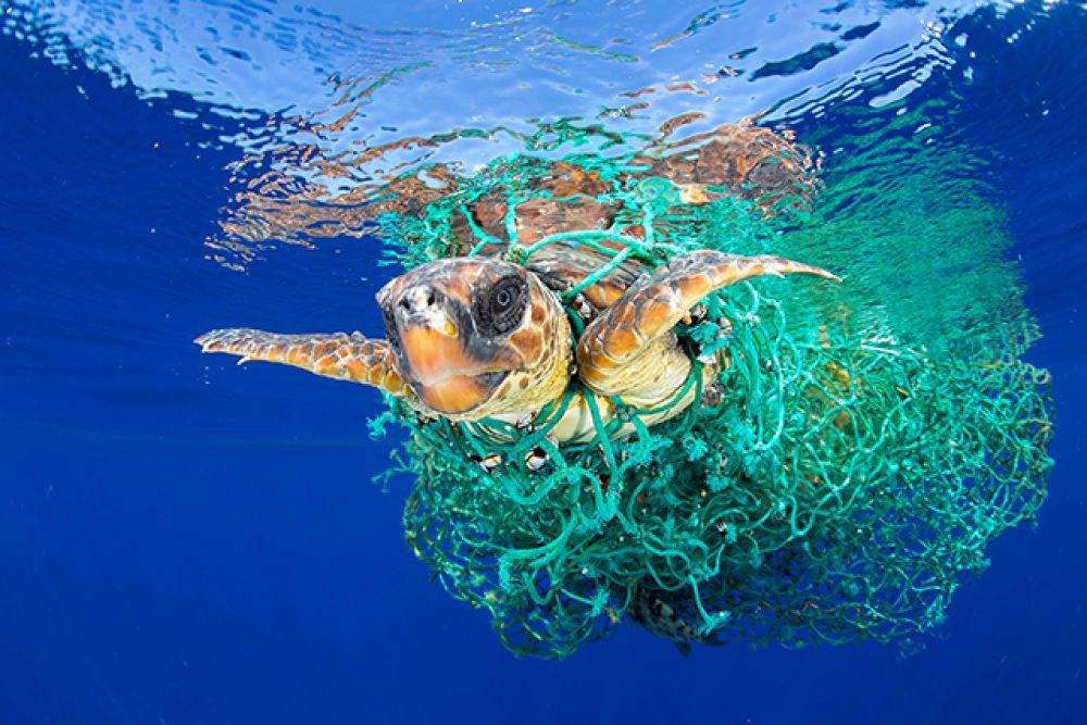 Категория «Природа», первое место в номинации «Отдельная фотография». Морская черепаха, запутавшаяся в рыболовной сети, плавает у берегов Тенерифе, июнь 2016 года.