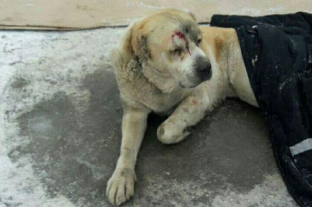 Собака истекала кровью на морозе