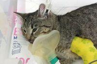 Кот выжил после падения с седьмого этажа