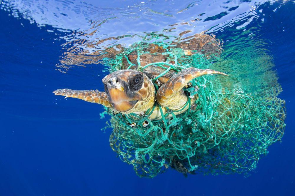 Фото с черепахой, которая пытается выбраться из сетей заняло первое место в категории «Природа»