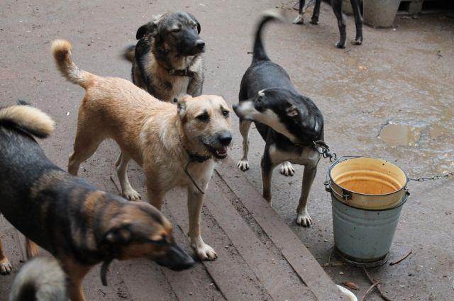 Число бездомных собак увеличилось в одном из районов края