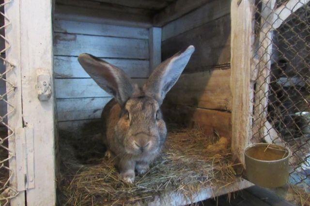 В будущем планируется реализовывать мясо кроликов в кафе для осужденных.