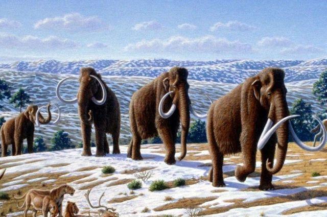 Животные достигали высоты 5,5 метров и массы тела 10—12 тонн