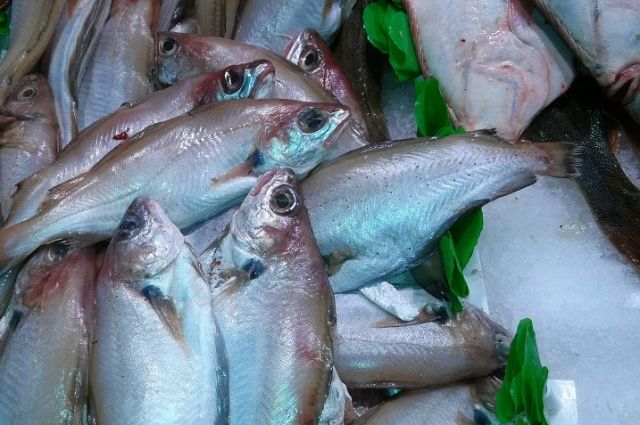 ВПетербург пытались ввести 80 тонн лжеиспанской рыбы