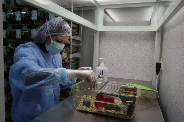 Ученые изМГУ отыскали замедляющее старение вещество