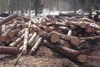 Пятерых подозреваемых в нелегальной рубке леса задержали в лесу.