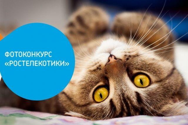 Котоконкурс проводят в преддверии Всемирного дня кошек.