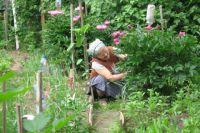 Люди собираются отстаивать свои садовые участки.