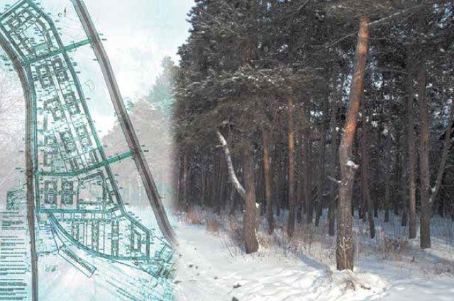 В Заволжском районе Ярославля вместо леса может появиться новый микрорайон.