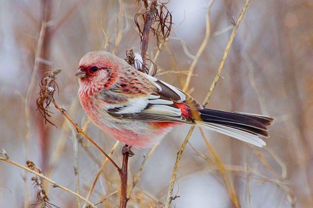 НаТаганае впервый раз появились японские птицы