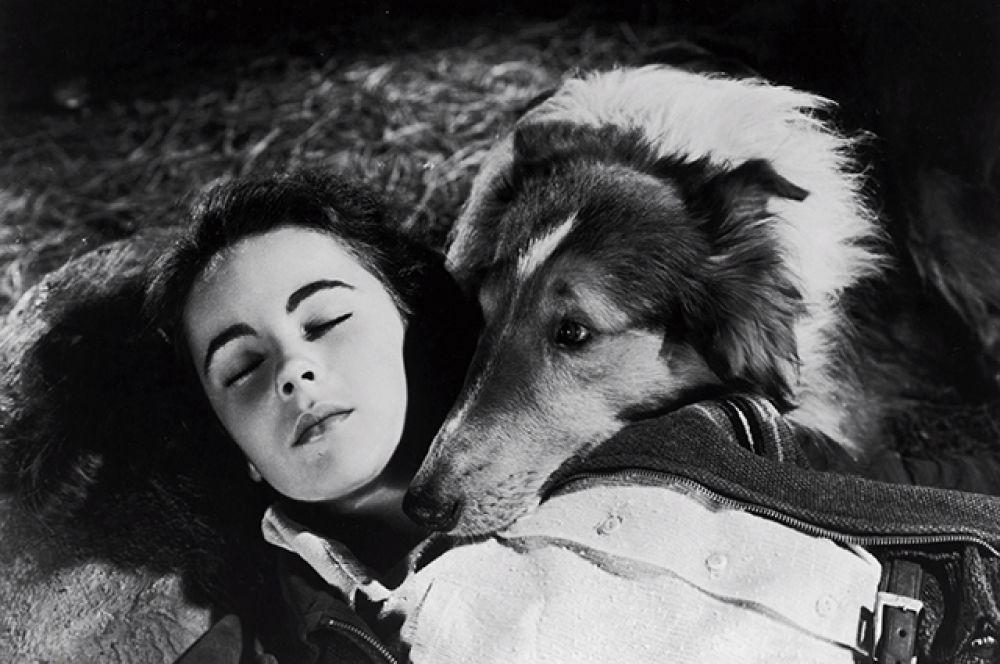 Элизабет Тейлор начала сниматься в 1942 году. В фильме «Лесси возвращается домой» (1943).