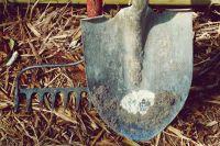 Дачники выбирают инвентарь, подбирают семена и ходят на лекции для садоводов-любителей.