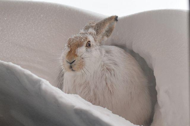 На кордоне Сармат рядом с людьми живет и заяц Пишка.