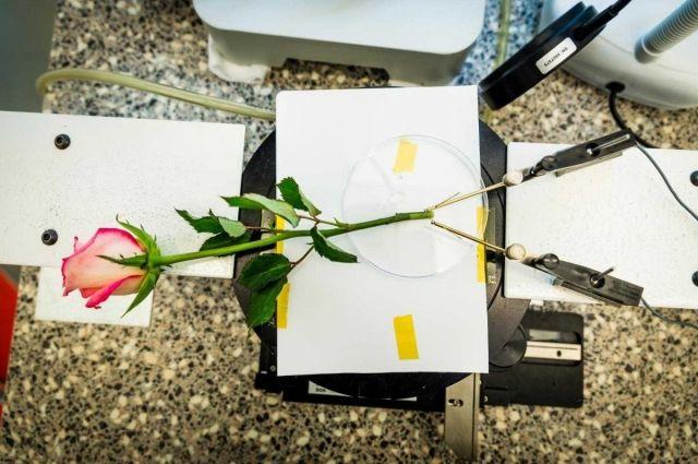 Ученые создали «цветок-киборг», запасающий энергию